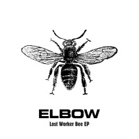 Lost Worker Bee - EP - Elbow