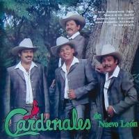 Y Qué Más Da - Cardenales De Nuevo León