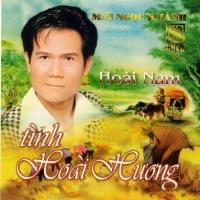 Tình Hoài Hương - Various Artists