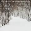 All I Want (For Christmas) (Single) - Liam Payne