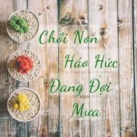 Chồi Non Háo Hức Đang Đợi Mưa - Various Artists