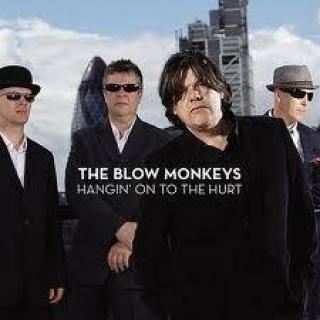 Monkeys Blow