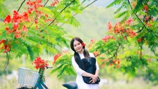 Hoa Học Trò - Lina Nguyễn