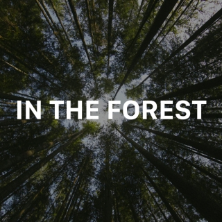 In The Forest - Various Artists